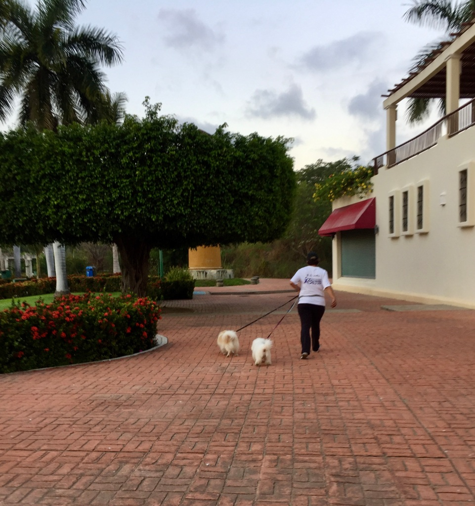 2019 - La Crucecita, Huatulco, Mexico - Early morning dog walkers!