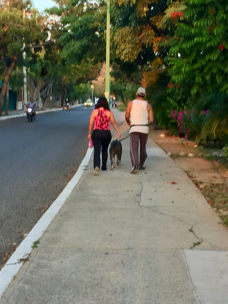 2019 - Huatulco, Mexico - La Crucecita - The picture is a bit blurry, but this couple walking their pit bull were a regular sight during my morning run!