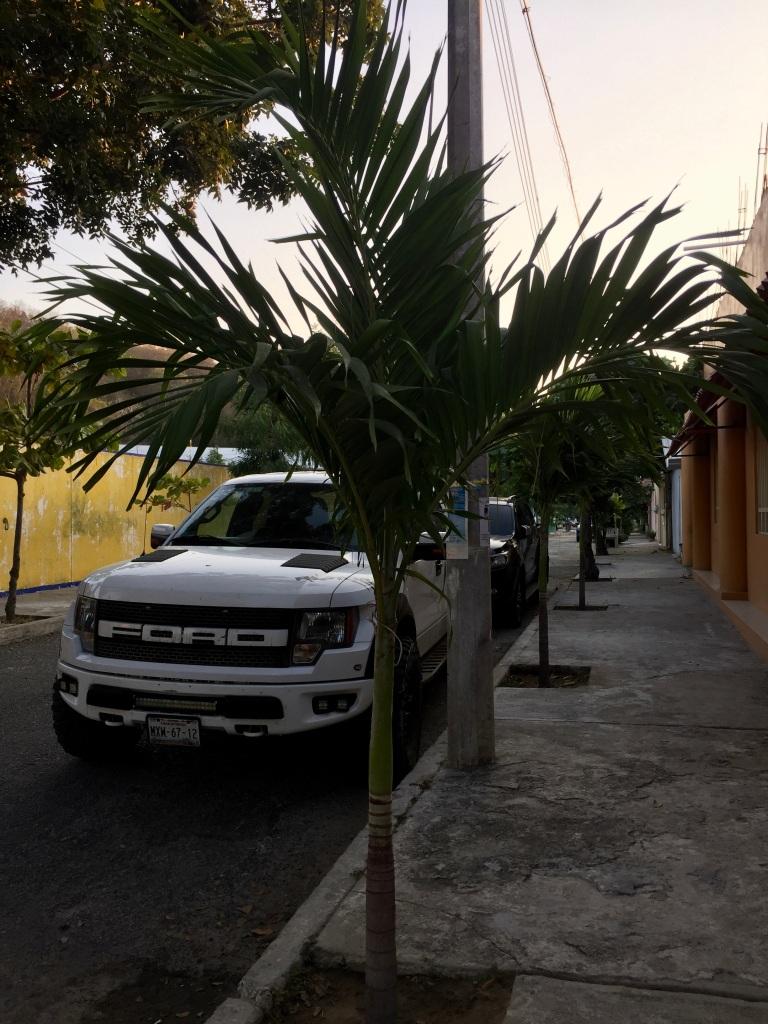 2019 - Huatulco, Mexico - La Crucecita - Trees