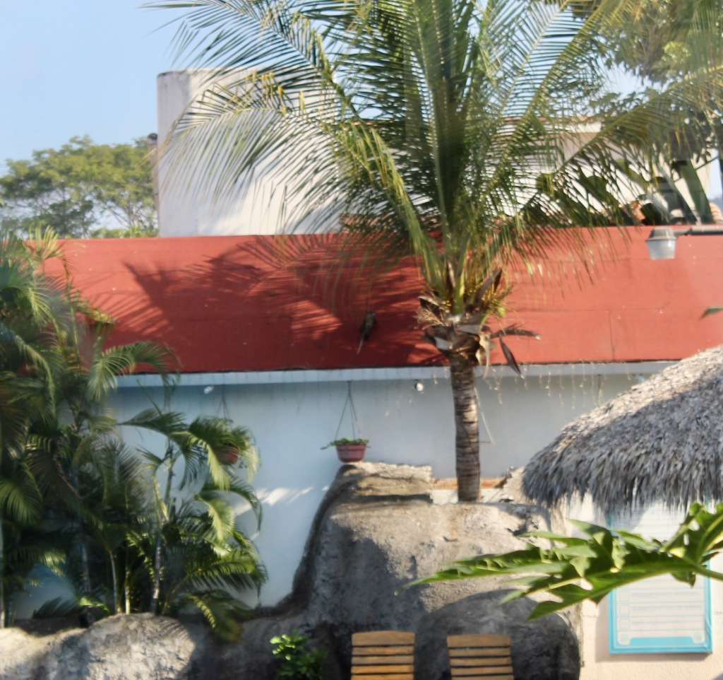 2019 - Chahué Bay - El Pibe de La Plata restaurant -h e restaurant is located in a hotel. From my seat, I watched a large rodent, possible a possum, hop up from a rock, onto this roof!