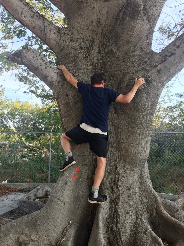 2020 - January 2nd - Huatulco, Mexico - La Crucecita - Morning run with Stephanie - Tree climbing!