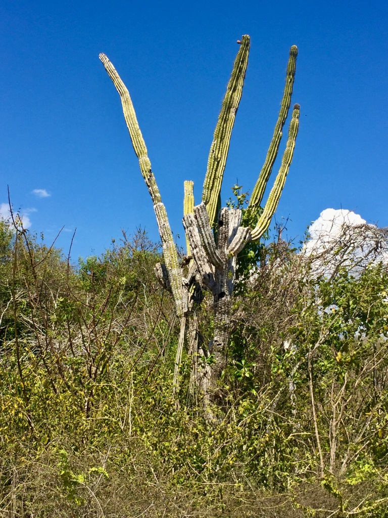 2020 - January 2nd - Huatulco, Mexico - Path to Conejos Beach - Cactuses and other flora