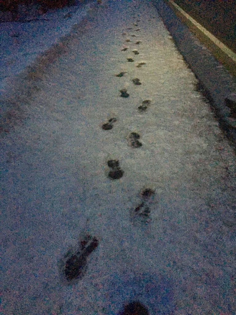 February - Thursday - My footprints in the slush from yesterday morning's run frozen in place!!!!
