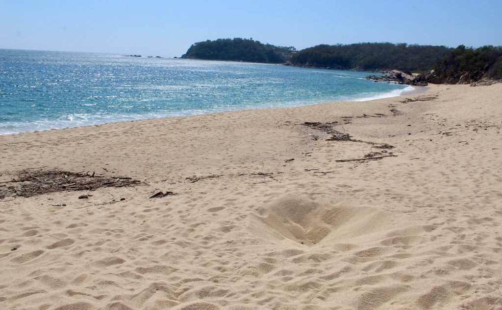 2020 - January 2nd - Huatulco, Mexico - Conejos Beach - Remains of a sea turtle's nest