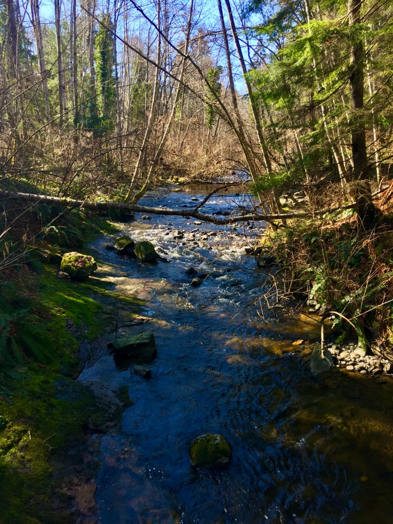 March 16th - Campbell River, Vancouver Island - Willow Creek Walk