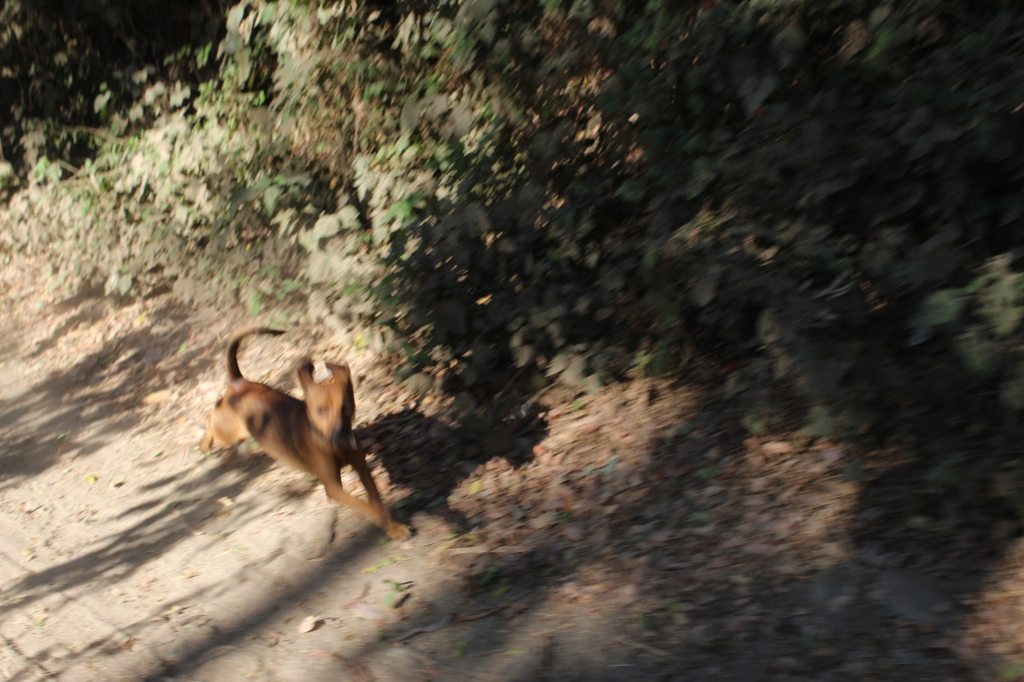 January 2nd, 2020 - Huatulco, Mexico - Looking for the town of Copalita - Driving along Copalita River - Little dog chasing after us!