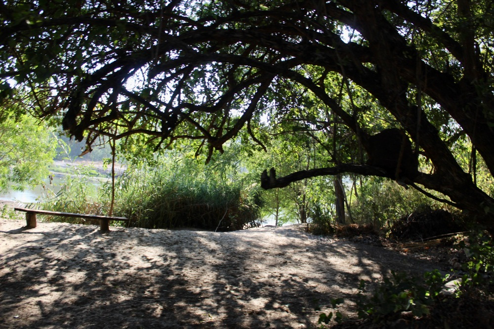 January 2nd, 2020 - Huatulco, Mexico - Looking for the town of Copalita - Heading back to the crossroads - Bench under an old tree