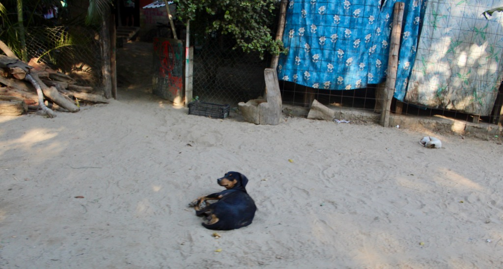 January 2nd, 2020 - Huatulco, Mexico - Looking for the town of Copalita - Back where we started - Woke this dog from her siesta!!