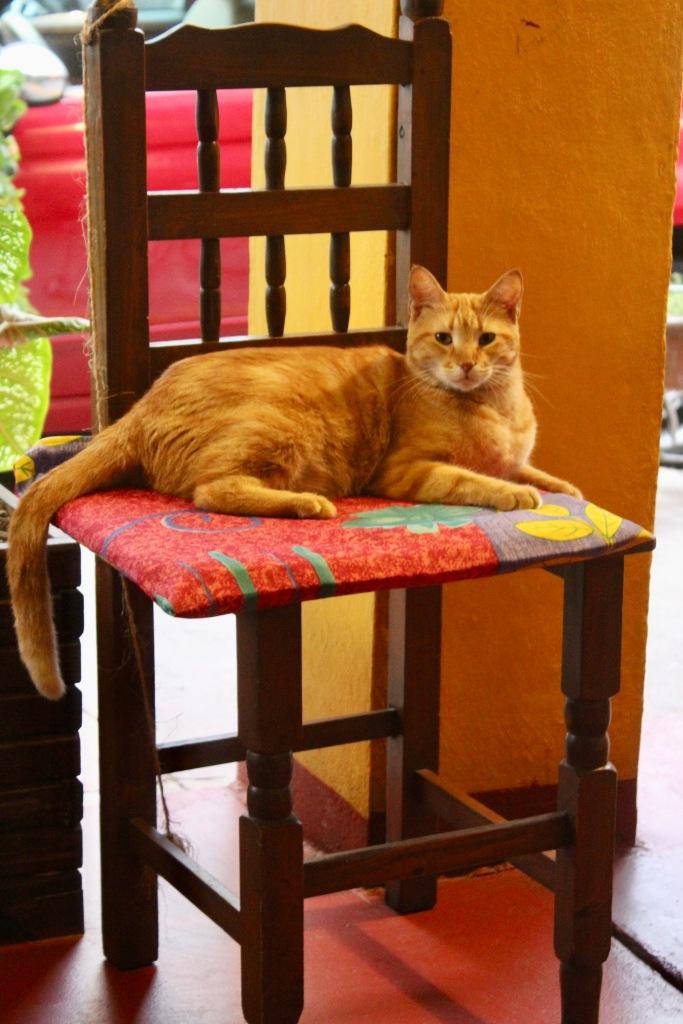 January 3rd, 2020 - Huatulco, Mexico - La Crucecita - Dinner at Giordanas Italian restaurant - Restaurant's cat