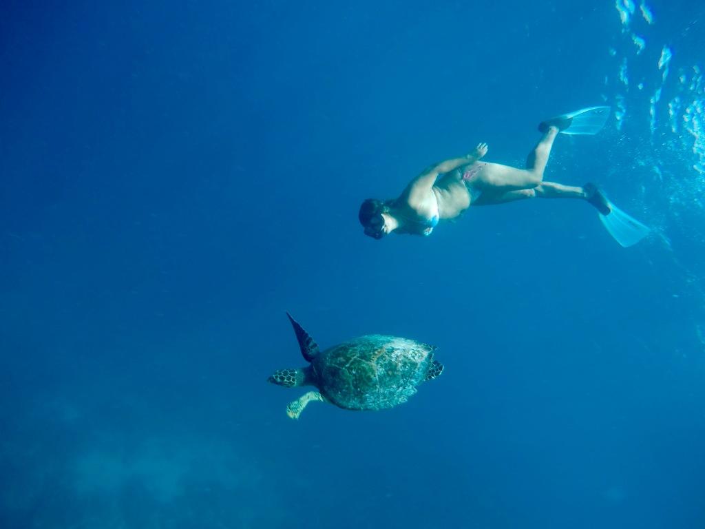 June - 2020 - Maldives - Following a Hawksbill Sea Turtle