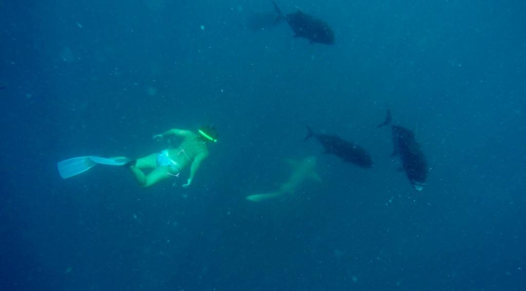 June - 2020 - Maldives - Following a Nurse Shark