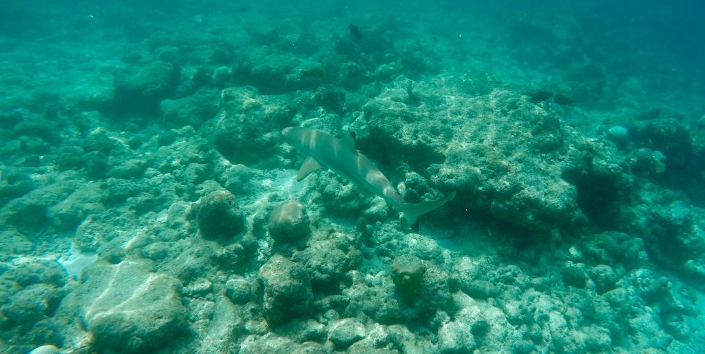 June - 2020 - Maldives - Following a Reef Shark