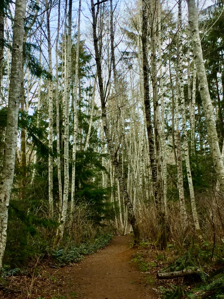 March, 2020 - Vancouver Island, British Columbia - Campbell River - Willow Point Trail