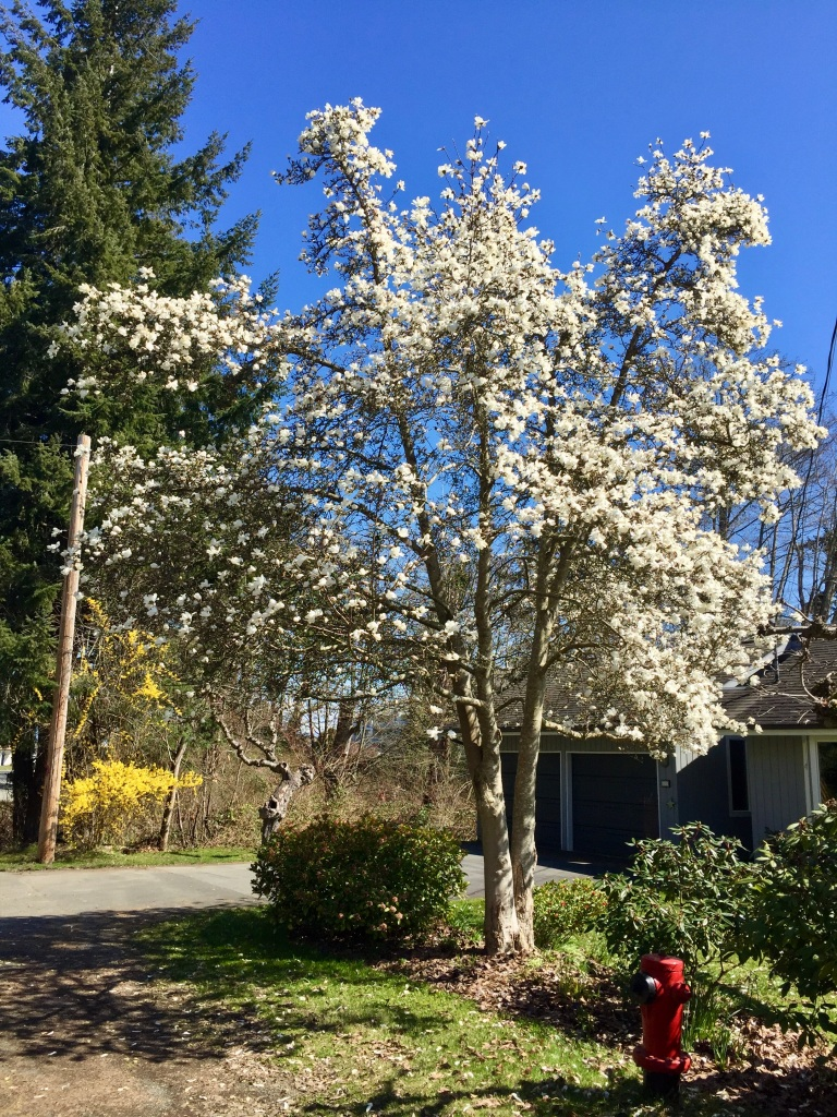 April, 2020 - Campbell River - Spring is in the air!