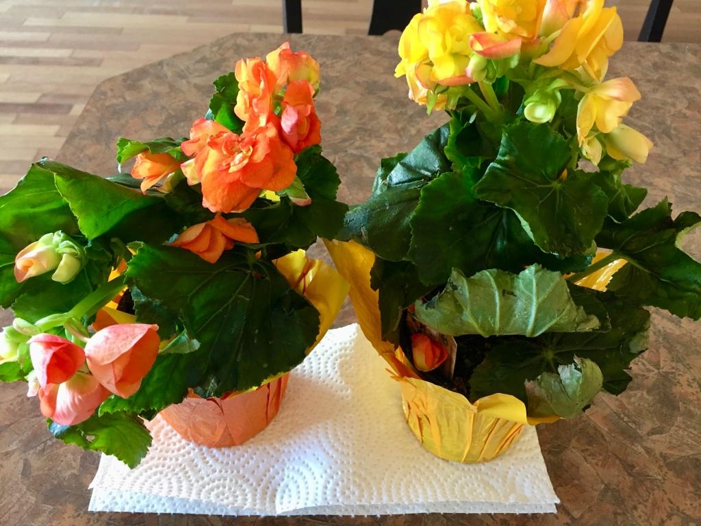 April 25th - My 51st Birthday - Birthday flowers
