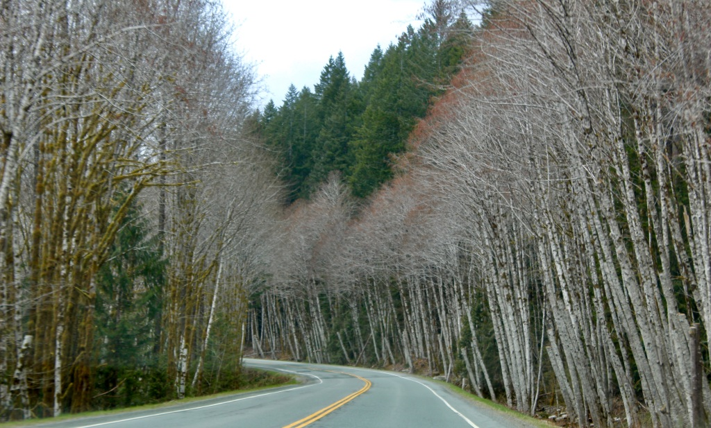 March, 2020 - Vancouver Island, British Columbia - Drive from Campbell River to Tofino