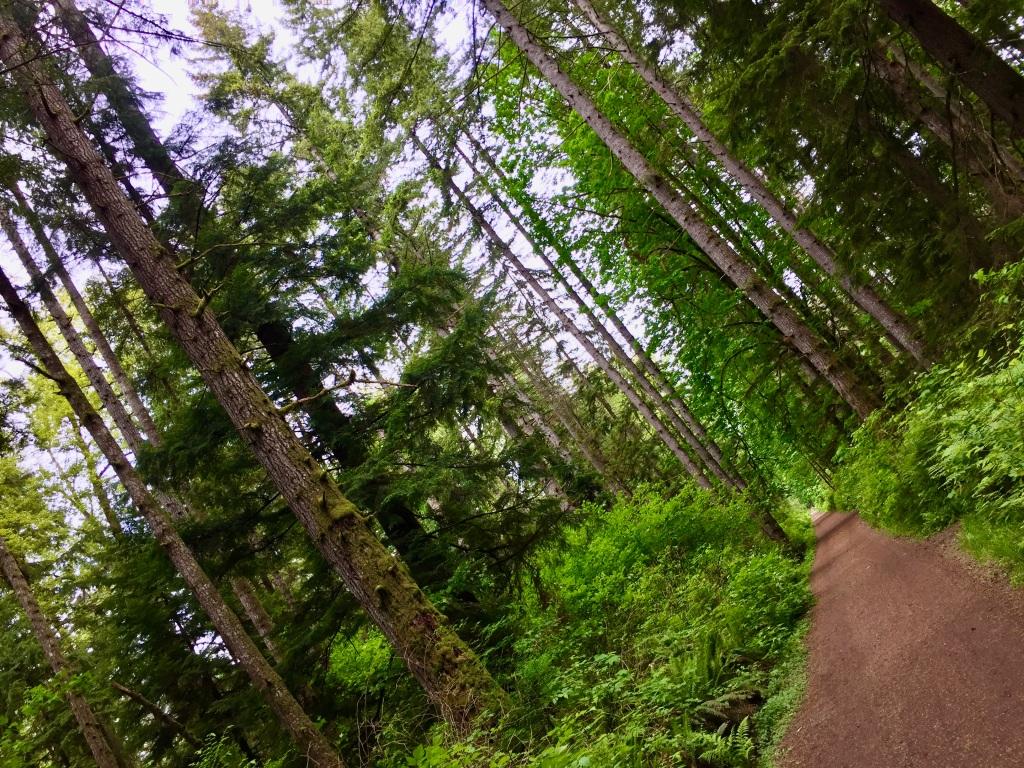 May, 2020 - Beaver Lodge Lands - Campbell River, Vancouver Island, British Columbia