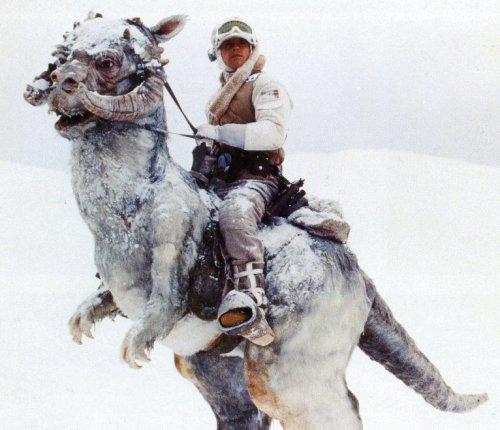 Luke Skywalker riding a Tauntaun