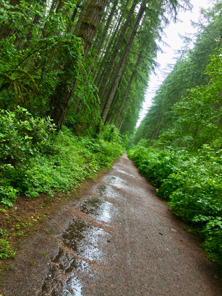 June, 2020 - Campbell River, Vancouver Island, British Columbia - Thousand shades of green
