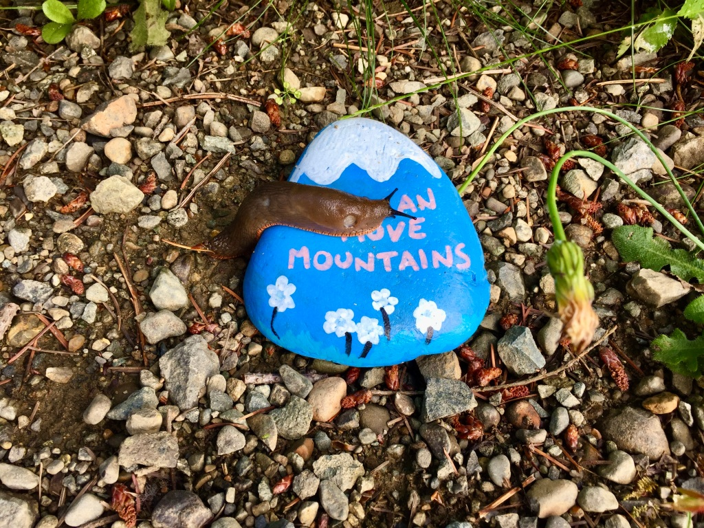 June, 2020 - Campbell River, Vancouver Island, British Columbia - This slug is conquering his mountain!