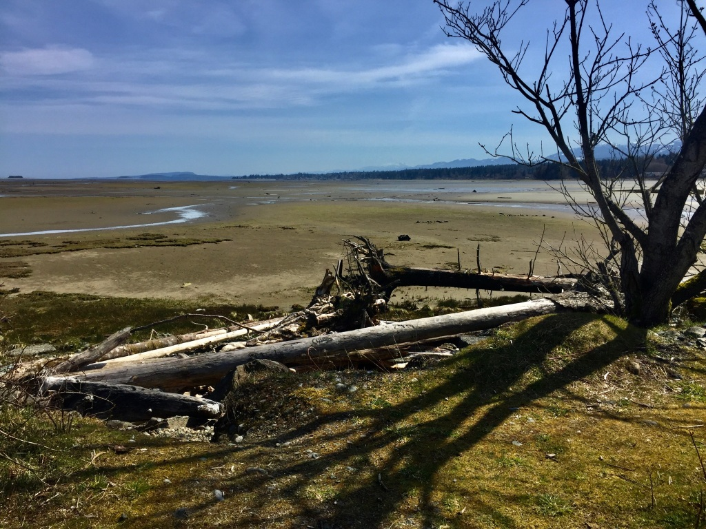 Spring, 2020 - Courtenay, Vancouver Island, British Columbia - The Courtenay Airpark - Driftwood