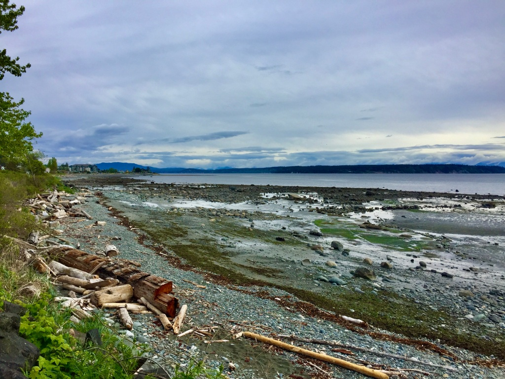 Spring/Summer 2020 - Campbell River, Vancouver Island, British Columbia - Shoreline along the town