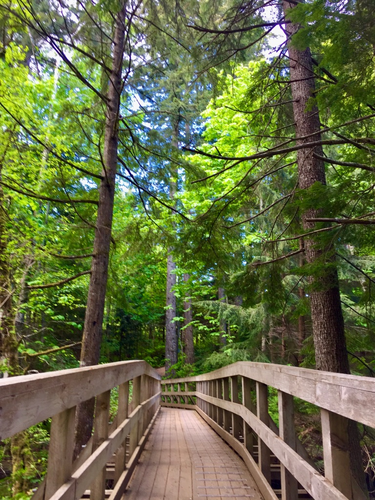 Spring/Summer 2020 - Campbell River, Vancouver Island, British Columbia - The trees!