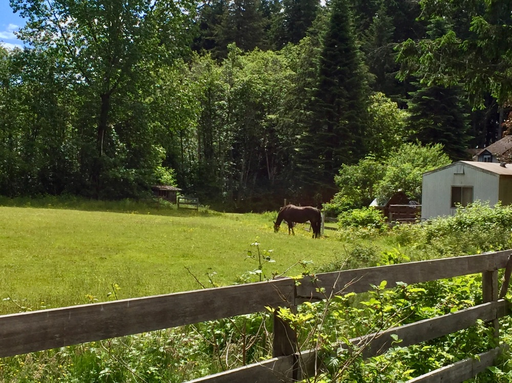 Spring/Summer 2020 - Campbell River, Vancouver Island, British Columbia - Horse in field