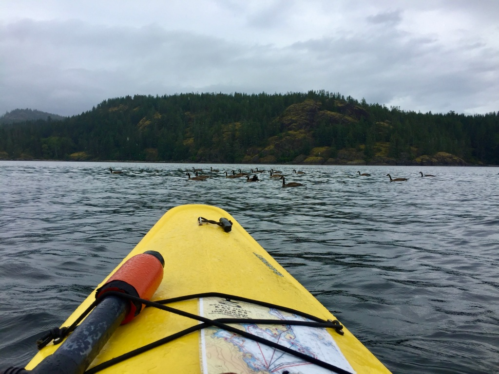 July 16th - Quadra Island, British Columbia - Kayaking - Stopping for traffic...