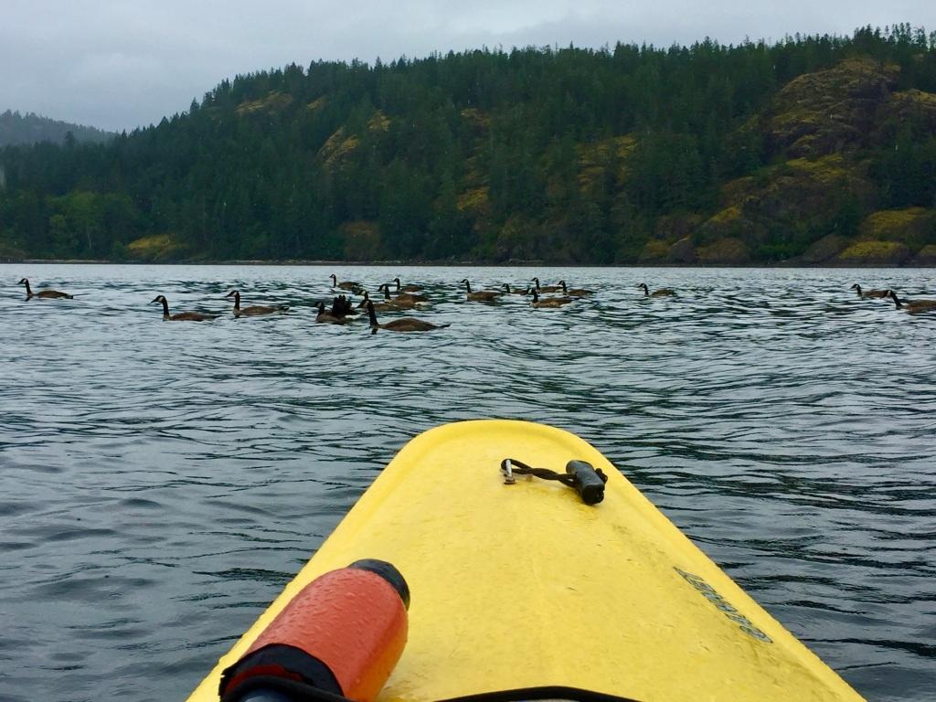 July 16th - Quadra Island, British Columbia - Kayaking - Stopping for traffic...