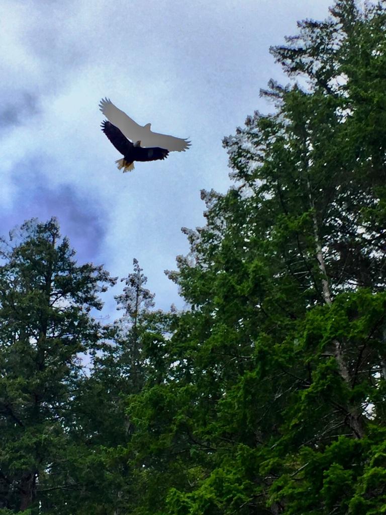 July 16th - Quadra Island, British Columbia - Kayaking - Hyacinthe Bay - Spirit of the Eagle!