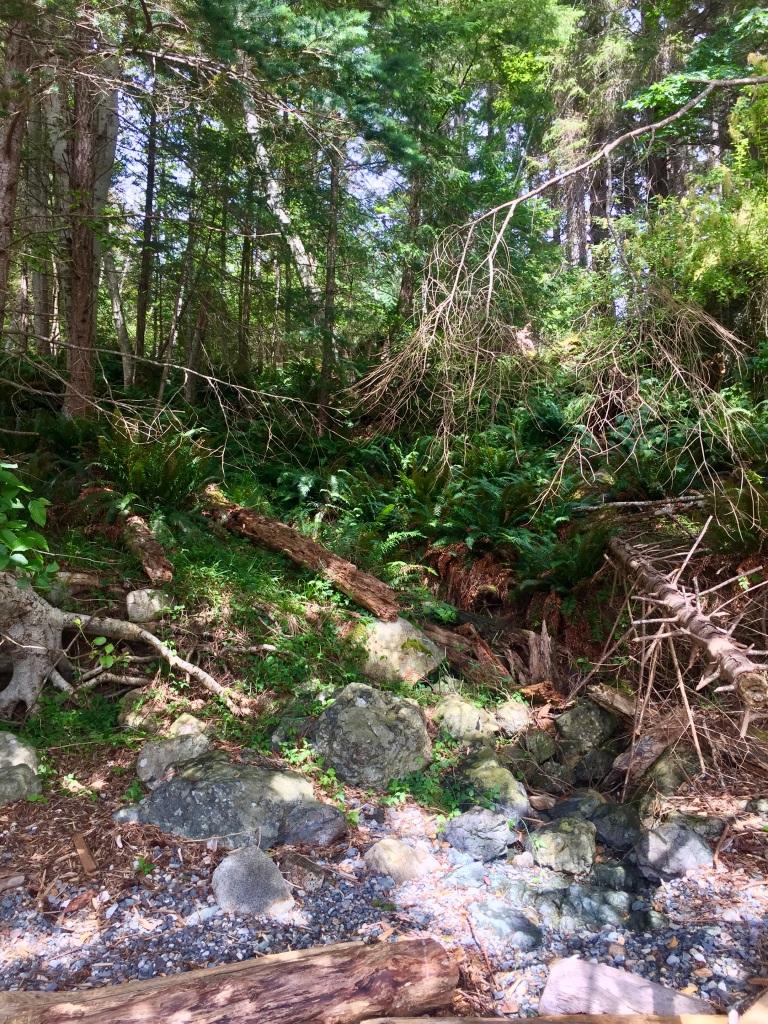 July 16th - Quadra Island, British Columbia - Kayaking - Hyacinthe Bay - Looking up into the trees
