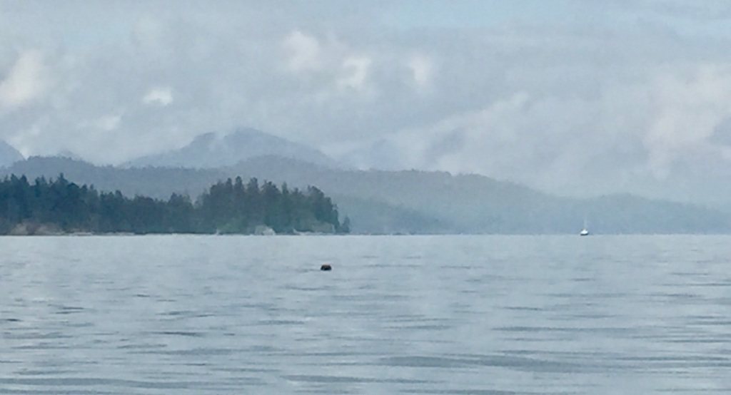 July 16th - Quadra Island, British Columbia - Kayaking - Seal, again off my port side