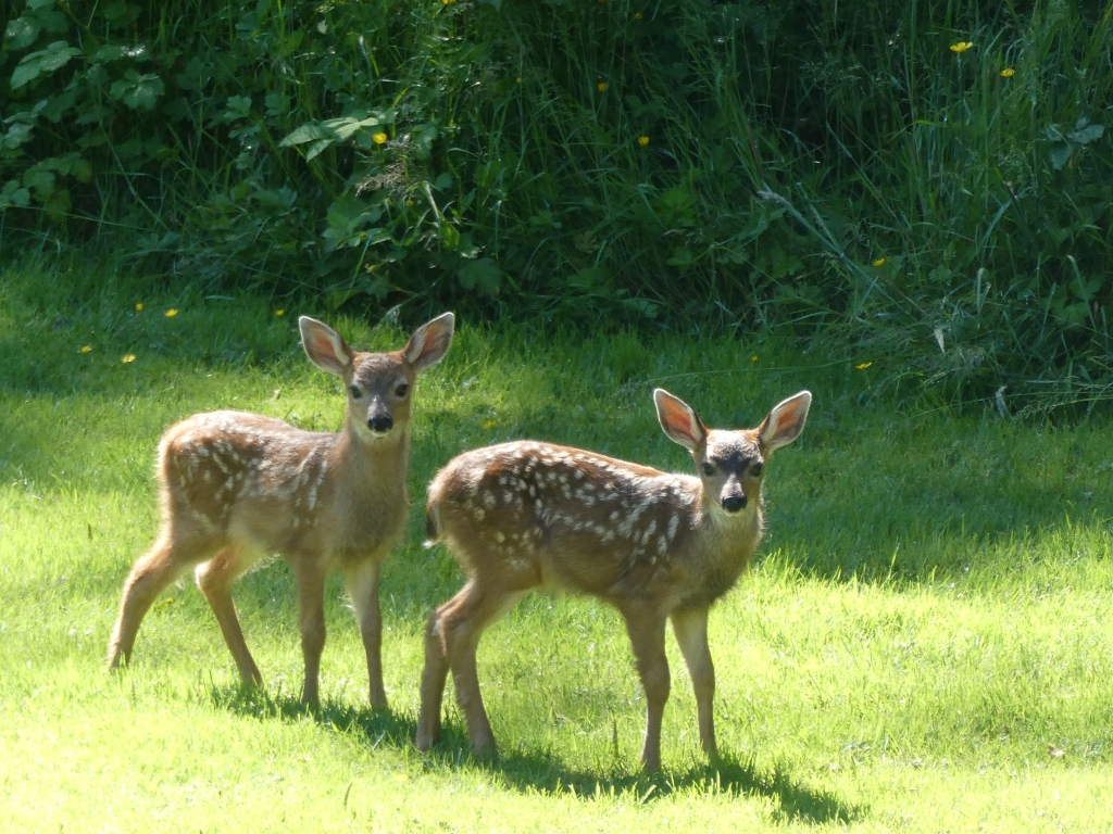 Spring/Summer 2020 - Campbell River, Vancouver Island, British Columbia - Babies!