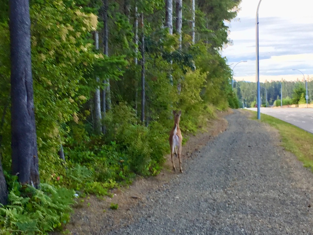 July, 2020 - Campbell River, Vancouver Island, British Columbia - Running with a deer!