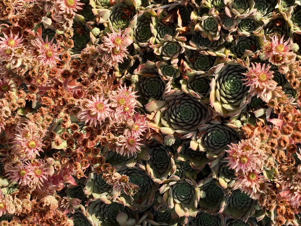 July, 2020 - Campbell River, Vancouver Island, British Columbia - Cactus