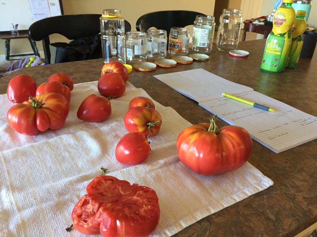 August, 2020 - Campbell River, Vancouver Island, British Columbia - Making tomato sauce!