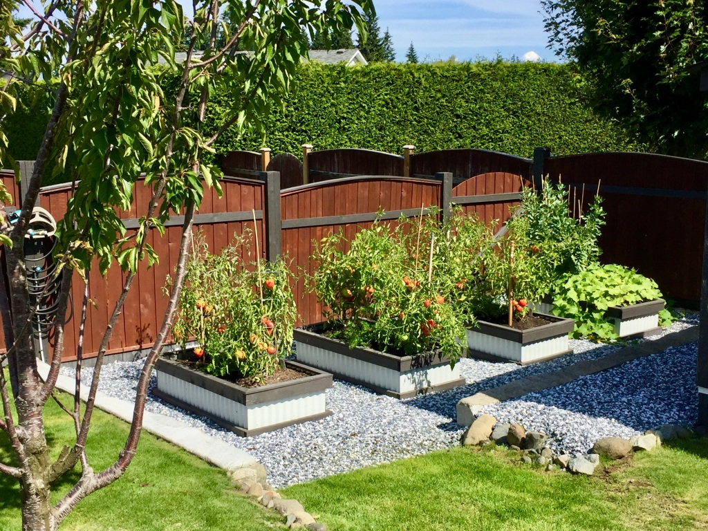 August, 2020 - Campbell River, Vancouver Island, British Columbia - Garden