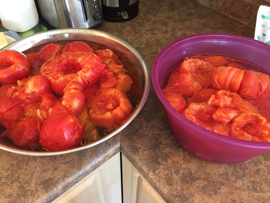 August, 2020 - Campbell River, Vancouver Island, British Columbia - Making tomato sauce - blanched tomatoes!