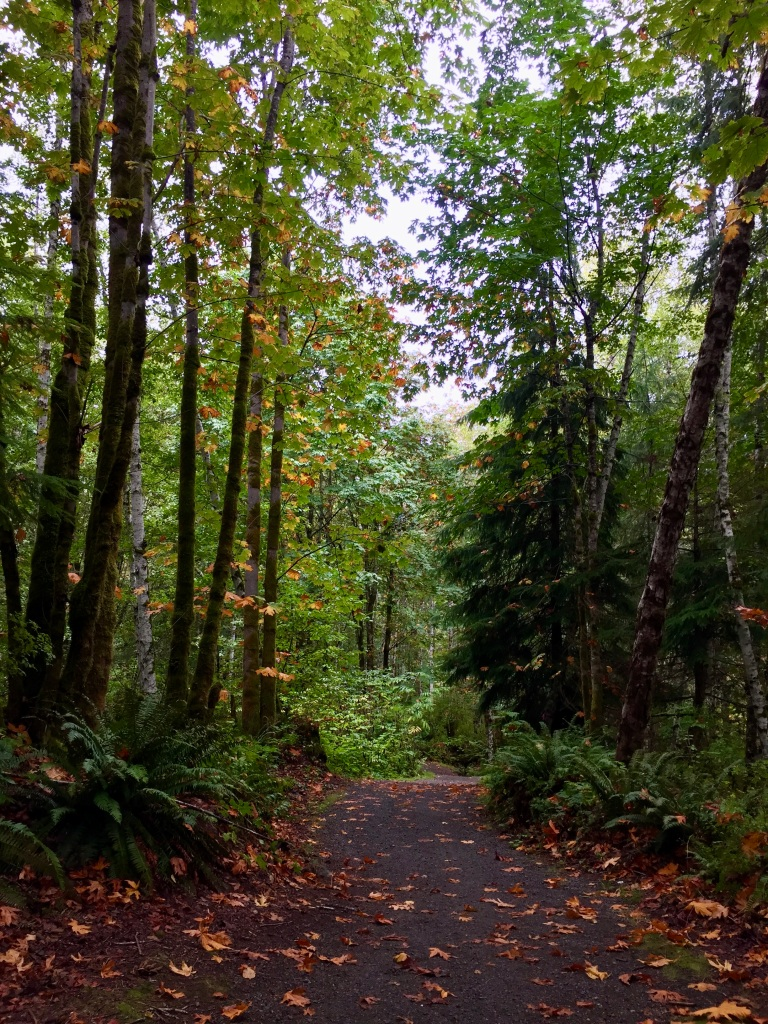 August/September, 2020 - Campbell River, Vancouver Island, British Columbia - Deciduous trees' leaves starting to turn color