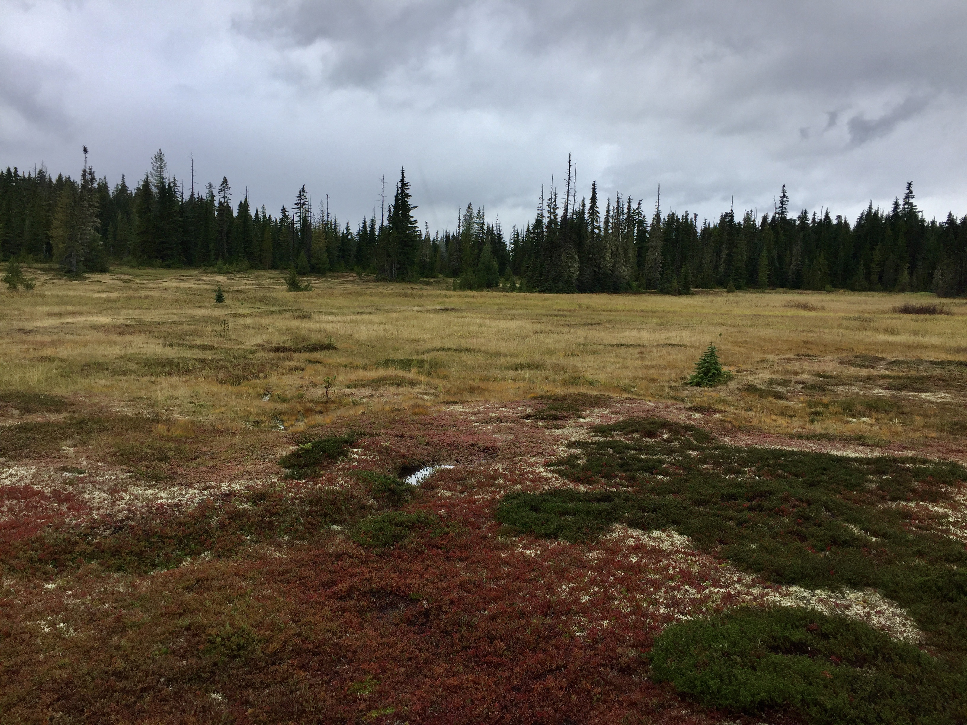 September, 2020 - Vancouver Island, British Columbia - Strathcona Provincial Park - Forbidden Plateau - Alpine meadow