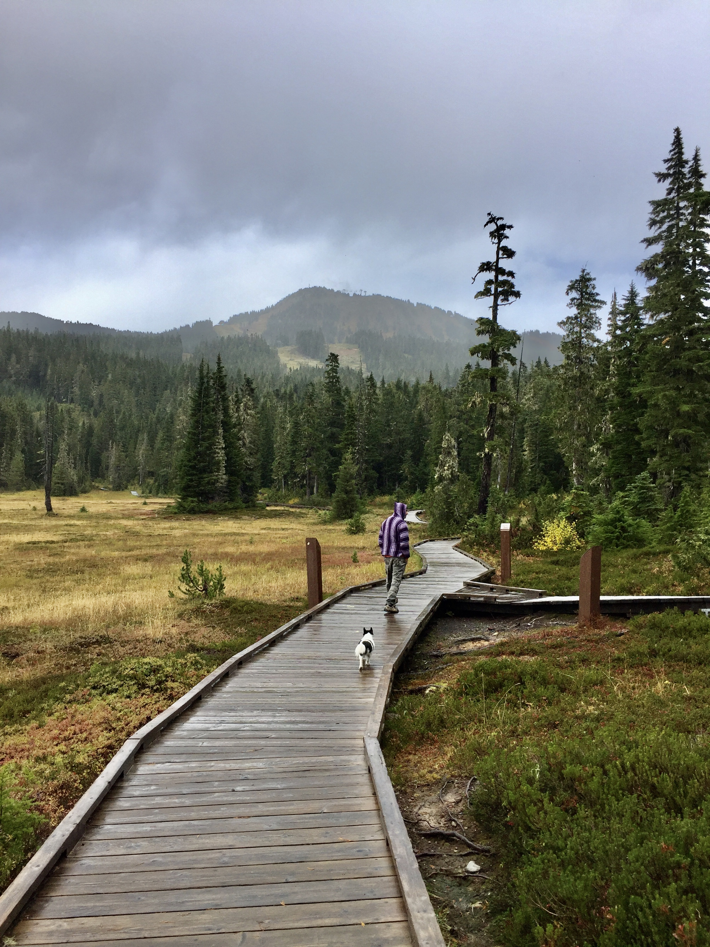 September, 2020 - Vancouver Island, British Columbia - Strathcona Provincial Park - Forbidden Plateau - Walking the second half of the loop, back to the parking lot