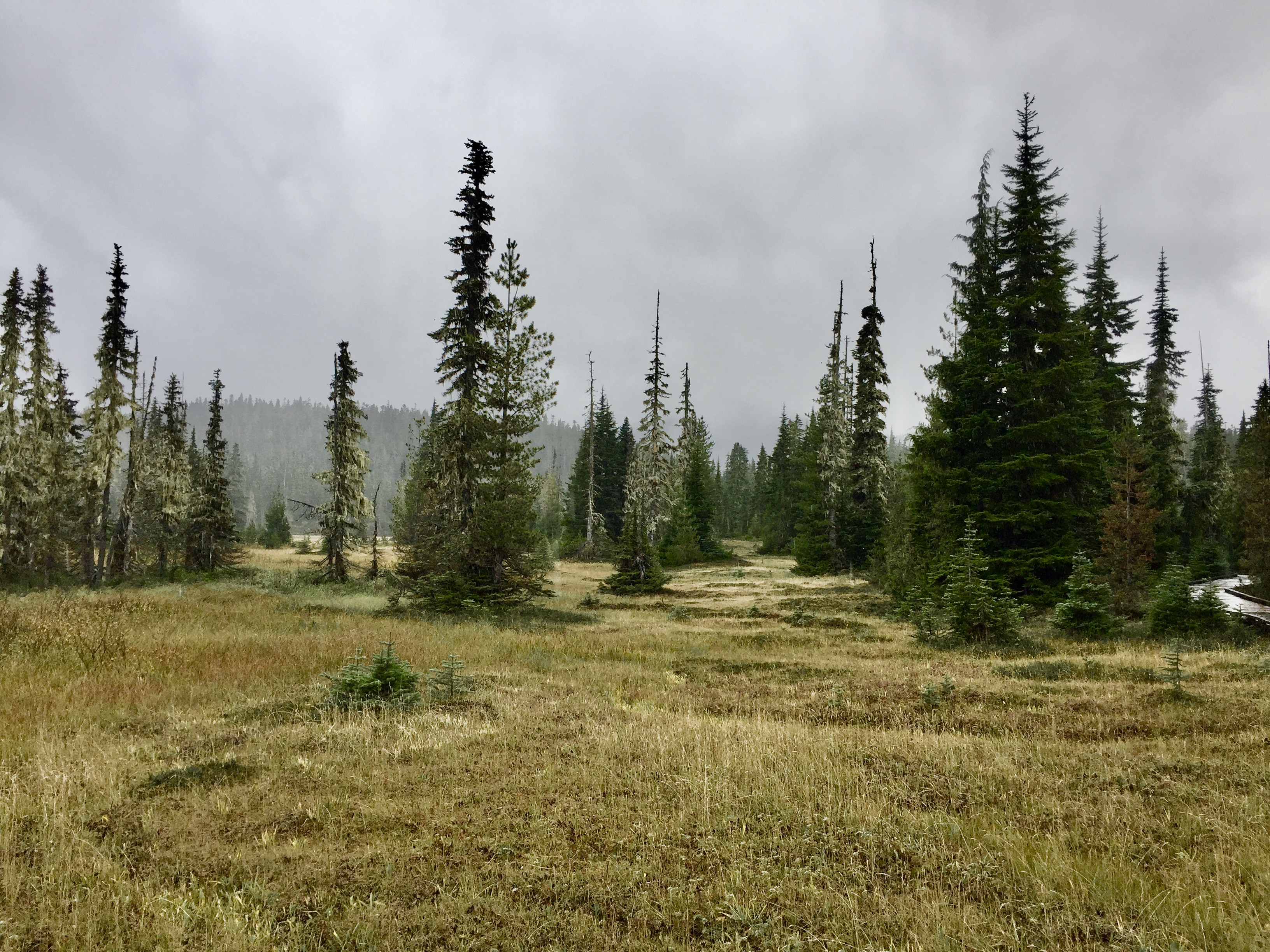 September, 2020 - Vancouver Island, British Columbia - Strathcona Provincial Park - Forbidden Plateau - Alpine meadow and trees