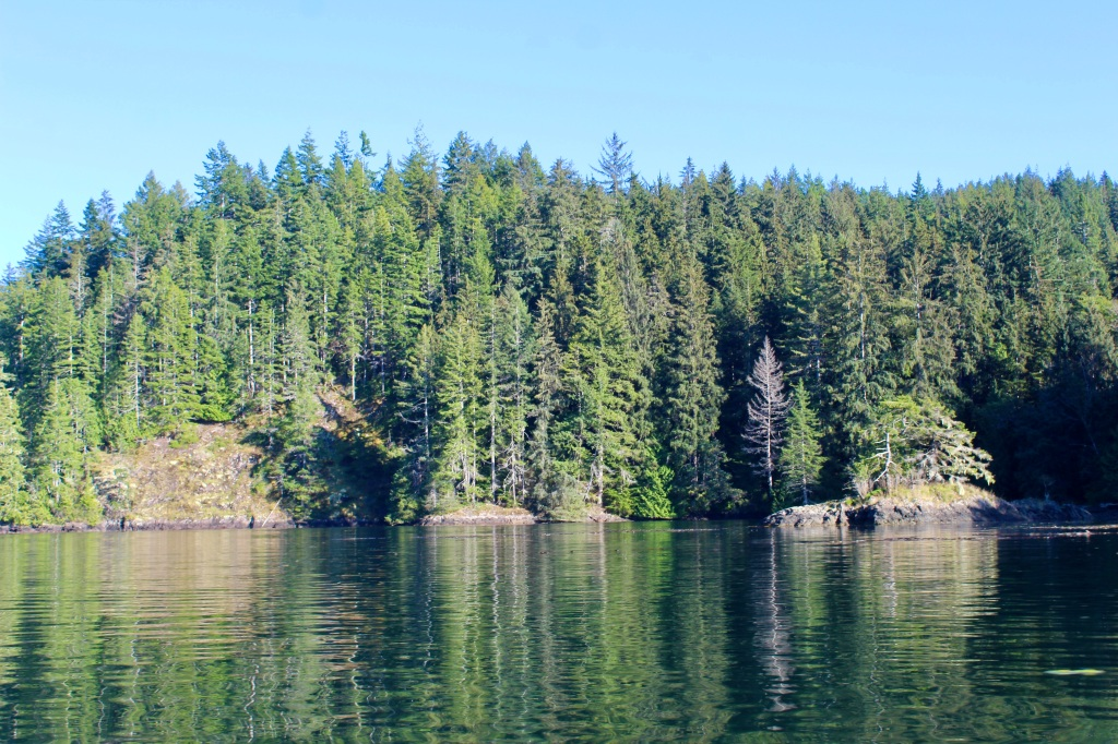 September 9th, 2020 - Quatsino Sound, Vancouver Island - Emerald green trees