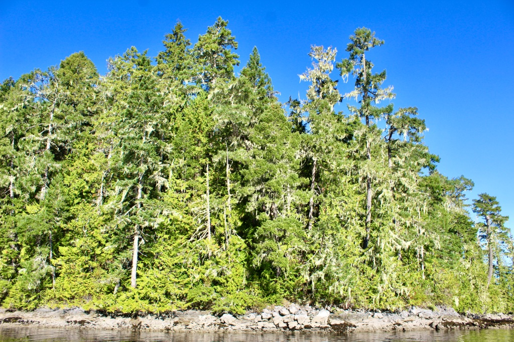 September, 2020 - Quatsino Sound, Vancouver Island, British Columbia - Beautiful trees