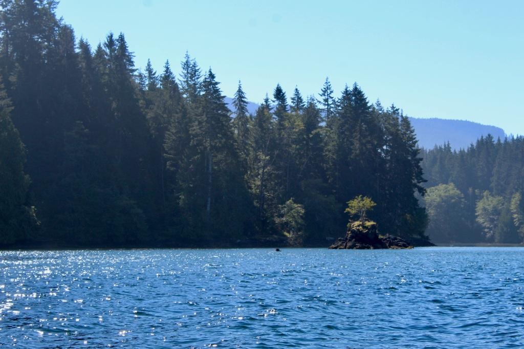 September, 2020 - Quatsino Sound, Vancouver Island, British Columbia - Tree on a rock