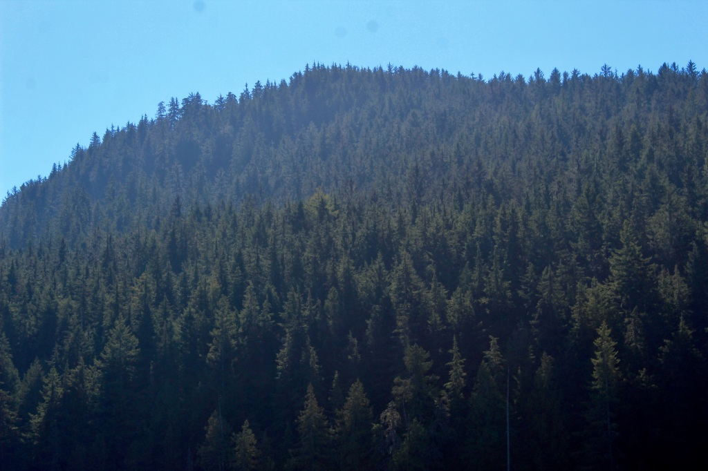 September, 2020 - Quatsino Sound, Vancouver Island, British Columbia - So many trees!
