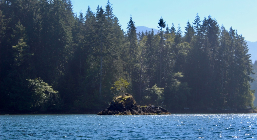 September, 2020 - Quatsino Sound, Vancouver Island, British Columbia - Another tree on a rock!