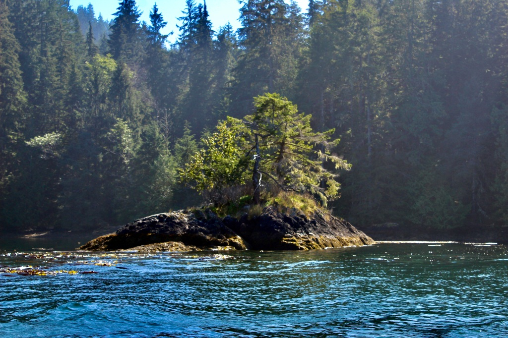 September, 2020 - Quatsino Sound, Vancouver Island, British Columbia - And again, another tree on a rock!