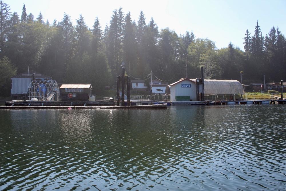 September, 2020 - Hecate Cove, Quatsino Sound, Vancouver Island, British Columbia, Canada